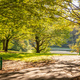 City park in Munich, Germany. View of grass field and trees - PhotoDune Item for Sale