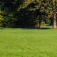 City park, Munich, Germany. View of a mature couple walking on the grass - PhotoDune Item for Sale