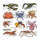 Crustacean Vectors - GraphicRiver Item for Sale
