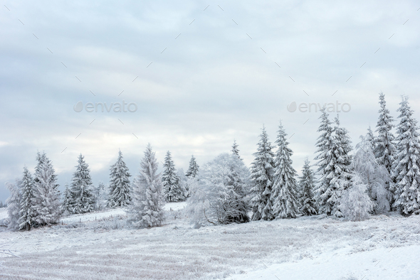 Fairy winter landscape with snow covered Christmas trees - Stock Photo - Images