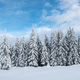 Christmas background, scenic snow covered forest in winter - PhotoDune Item for Sale