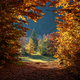 Autumn tree in forest - PhotoDune Item for Sale