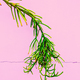Plants on pink concept.  Tropical green Minimal art - PhotoDune Item for Sale