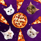 Cats in space pizza. Contemporary minimal collage. Funny Fast fo - PhotoDune Item for Sale