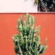 Cactus on pink background. Minimal plants on pink concept art - PhotoDune Item for Sale