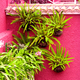 Plants on pink fashion concept. Tropical green on pink wall - PhotoDune Item for Sale