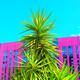 Tropical location. Palms and Urban. Minimal art - PhotoDune Item for Sale