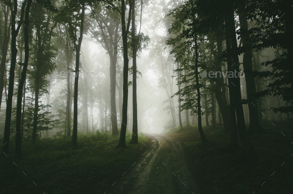 Road leading through the haunted woods - Stock Photo - Images