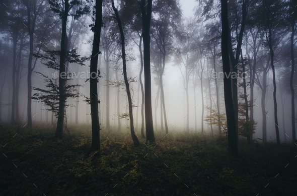 Dark mist in the haunted woods - Stock Photo - Images