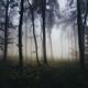 Dark mist in the haunted woods - PhotoDune Item for Sale