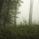 Green wild forest with fog - PhotoDune Item for Sale