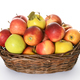 basket with colorful apples - PhotoDune Item for Sale
