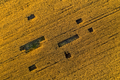 Aerial agricultural landscape. Plantation field ready for harvest. Above view from a drone - PhotoDune Item for Sale