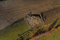 Aerial drone view of sheep in sheepfold in the mountains - PhotoDune Item for Sale