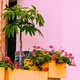 Tropical flowers. Tropical plant. Urban location - PhotoDune Item for Sale