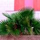 Palm in urban Plants on pink minimal fashion green - PhotoDune Item for Sale