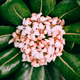 Canary island Flower. Plant lover concept - PhotoDune Item for Sale