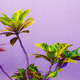 Tropical plant on purple. Garden lover - PhotoDune Item for Sale