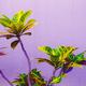 Tropical plant on purple. Garden lover - PhotoDune Item for Sale