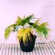 Mini palm in the pot. Garden lover concept - PhotoDune Item for Sale