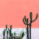 Plant on pink concept. Cactus in urban locations - PhotoDune Item for Sale