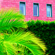 Tropical fashion vibes. Palm on pink wall background. Canary isl - PhotoDune Item for Sale