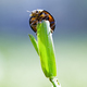 ladybug - PhotoDune Item for Sale