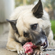 dog eating - PhotoDune Item for Sale