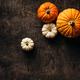 Pumpkins on a dark background - PhotoDune Item for Sale