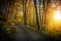 Fall Foliage Forest Route - PhotoDune Item for Sale