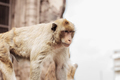 Monkey in a zoo of thailand - PhotoDune Item for Sale