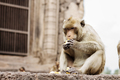 Monkey on brick are eating - PhotoDune Item for Sale