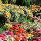Colorful of flower in garden - PhotoDune Item for Sale