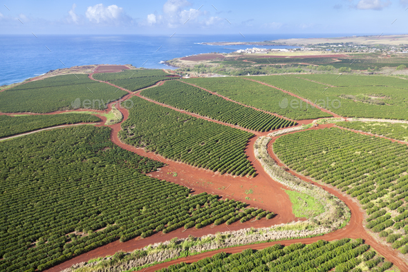Coffee Plantations By The Coast, Kauai - Stock Photo - Images