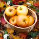 Fall concept with apples in the wicker basket - PhotoDune Item for Sale