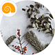 Free Download For Christmas Nulled