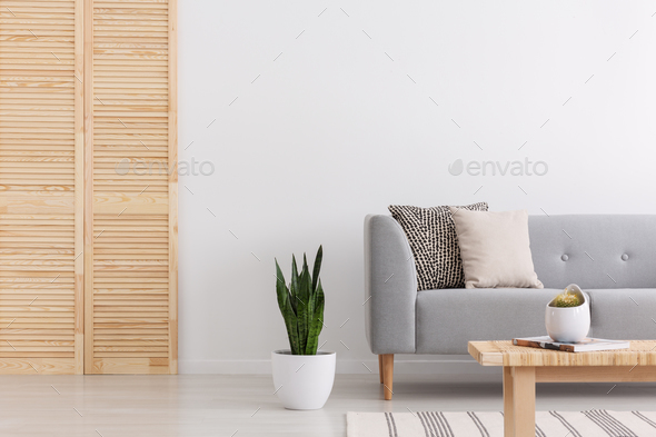 Green plant in white pot between wooden screen and simple grey s - Stock Photo - Images