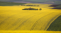 Small house in rape field - PhotoDune Item for Sale