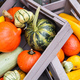 The multi-colored pumpkins lying on straw with a wooden box in a background. Autumn time - PhotoDune Item for Sale