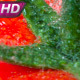 Freshly Pickled Tomatoes - VideoHive Item for Sale