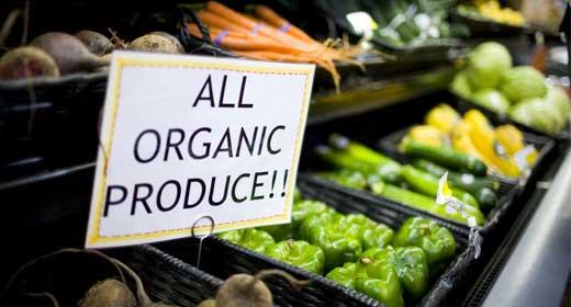 Best Organic Farm & Food WordPress Themes
