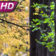 Old Maple Trees Shed Their Leaves - VideoHive Item for Sale