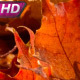 Morning Sun And Dew On Leaves - VideoHive Item for Sale