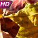 Dry Colors Of Autumn Leaves - VideoHive Item for Sale