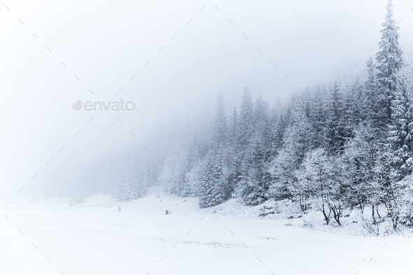 White Christmas Snow Background.Winter White Forest With Snow Christmas Background