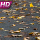 Wind Blows Away The Autumn Leaves - VideoHive Item for Sale