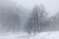 Snow falling over winter landscape - PhotoDune Item for Sale