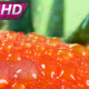 Lots Of Ripe Tomatoes - VideoHive Item for Sale