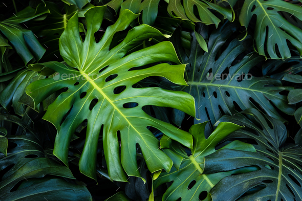 Tropical Green Leaves Background Stock Photo By Kitzstocker Photodune Green leaves wall stickers for home bedroom living room tropical plants wall sticker vinyl wall decals door murals wallpaper. https photodune net item tropical green leaves background 22802431