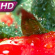 Fresh Tomatoes For Restaurant - VideoHive Item for Sale